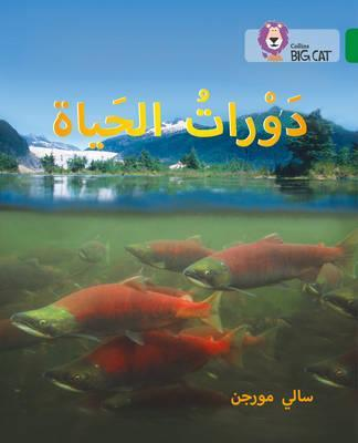 Life Cycles: Level 15 (Collins Big Cat Arabic Reading Programme) - Sally Morgan