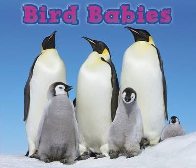 Bird Babies - Catherine Veitch