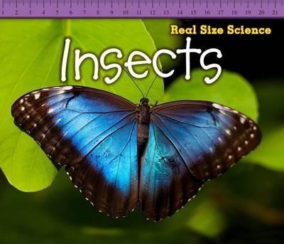 Insects - Rebecca Rissman