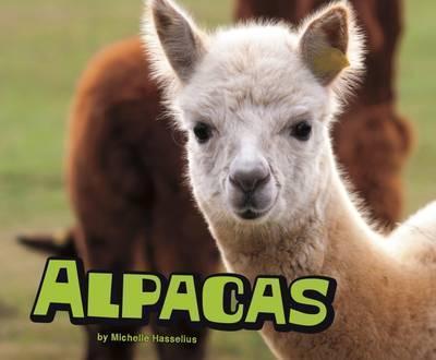 Alpacas - Michelle M. Hasselius