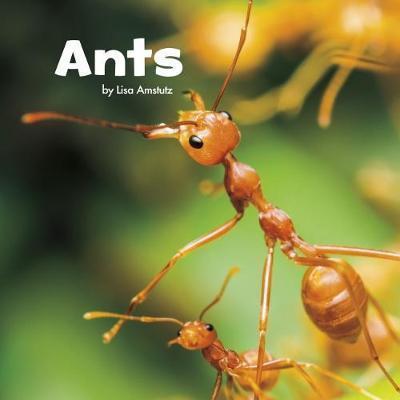 Ants - Lisa J. Amstutz