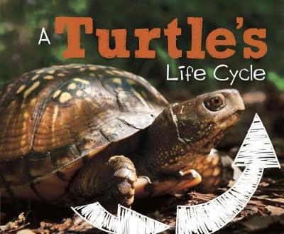 A Turtle's Life Cycle - Mary R. Dunn