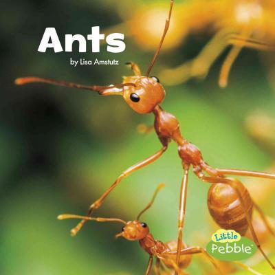 Ants - Lisa J Amstutz