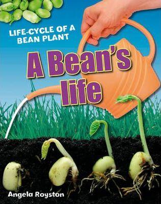 A Bean's Life: Age 6-7