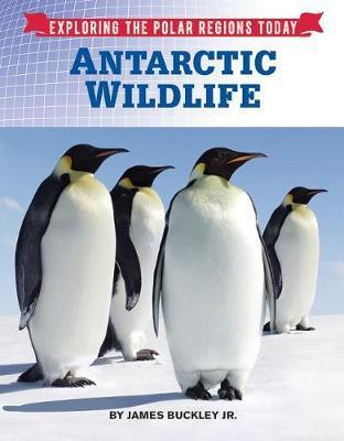 Antarctic Wildlife - James Buckley
