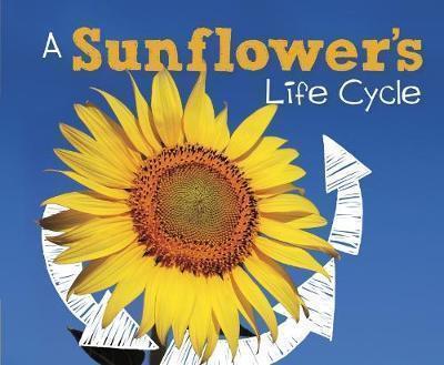 A Sunflower's Life Cycle - Mary R. Dunn
