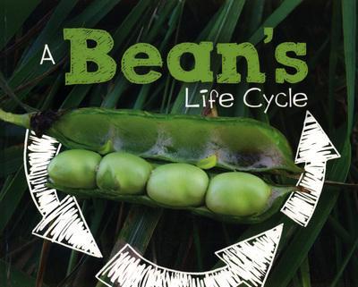 A Bean's Life Cycle - Mary R. Dunn