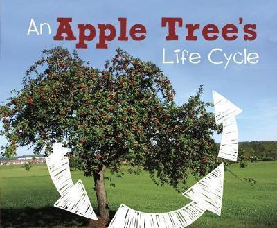 An Apple Tree's Life Cycle - Mary R. Dunn