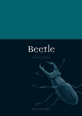 Beetle - Adam Dodd
