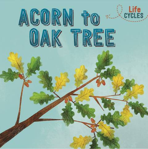 Life Cycles: Acorn to Oak Tree - Rachel Tonkin - 9781526310279