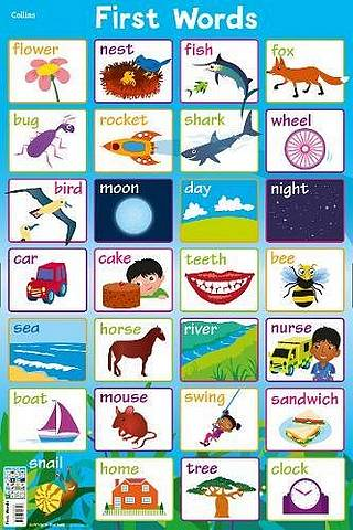 Collins Children's Poster: First Words - Steve Evans - 9780008304706